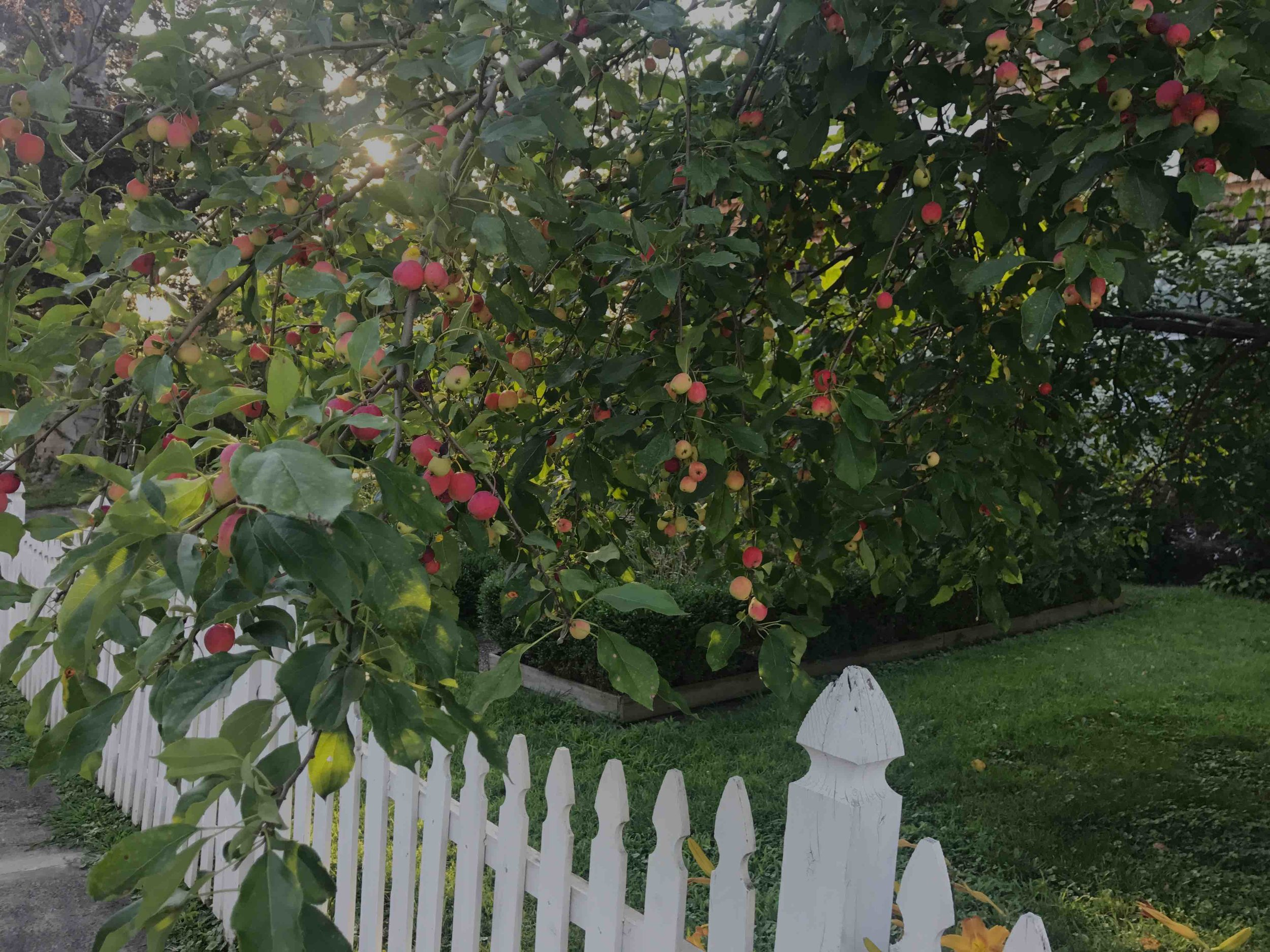Enjoy The Fruits & Blossoms In Our Carefully Tended Gardens -