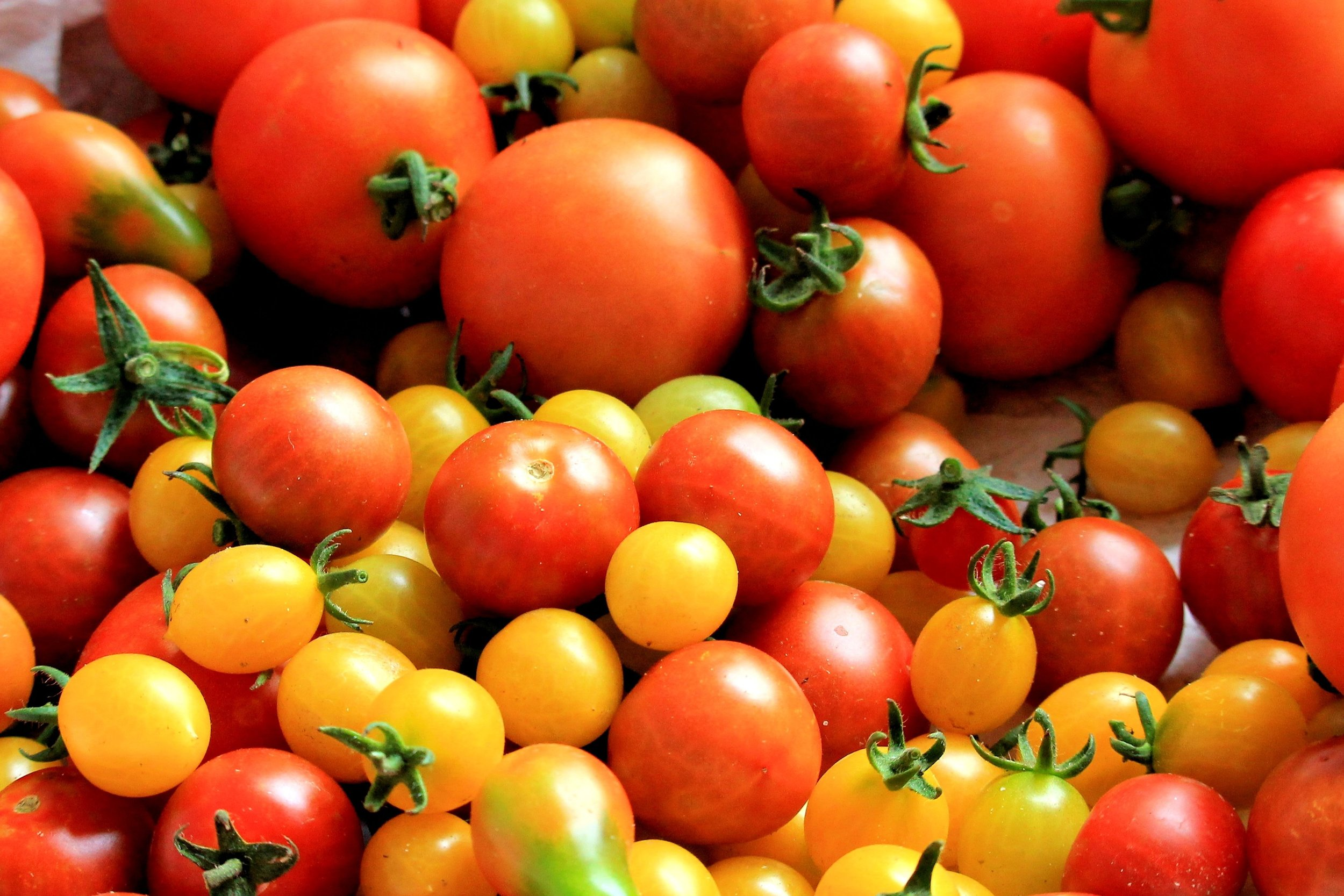 food-fresh-tomatoes-162830.jpg