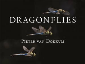 Dragonflies by Pieter van Dokkum.jpg