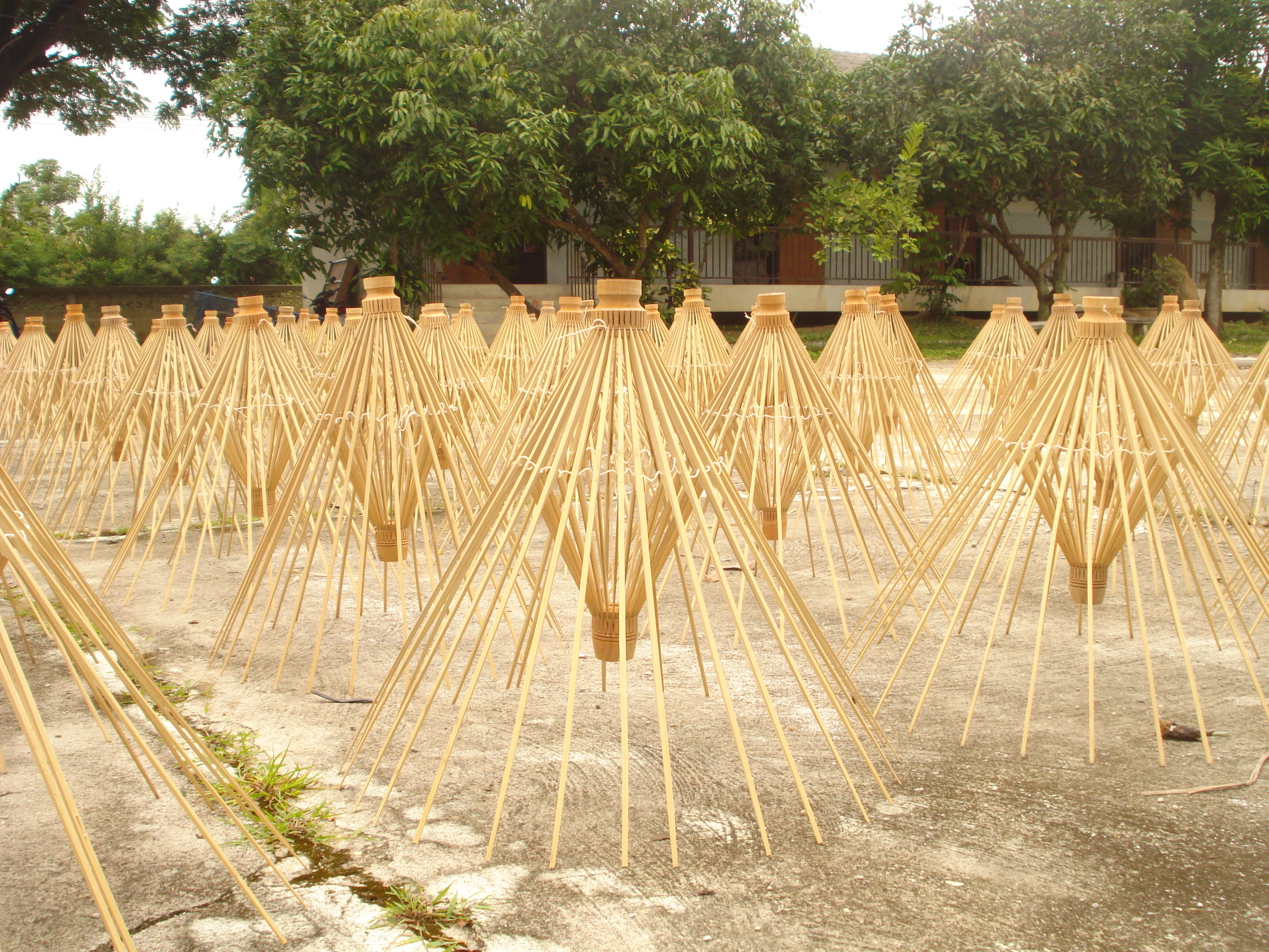 A whole batch of BRELLIs drying in the sun in Chiang Mai, Thailand.