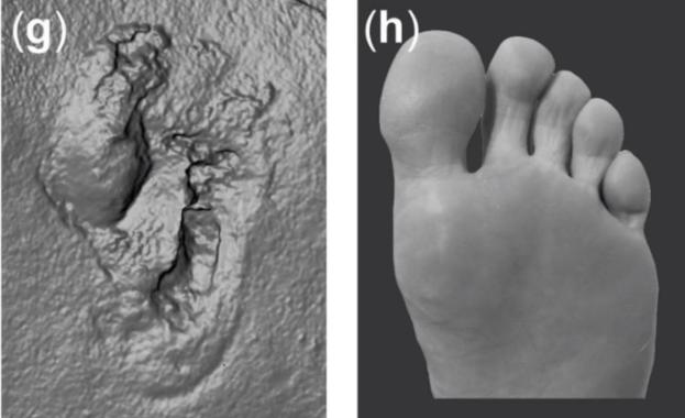 Similarity between the ancient footprints and a human foot