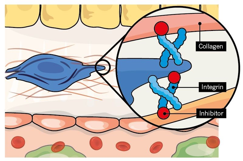 Targeting intergrins on the surface on myofibroblasts