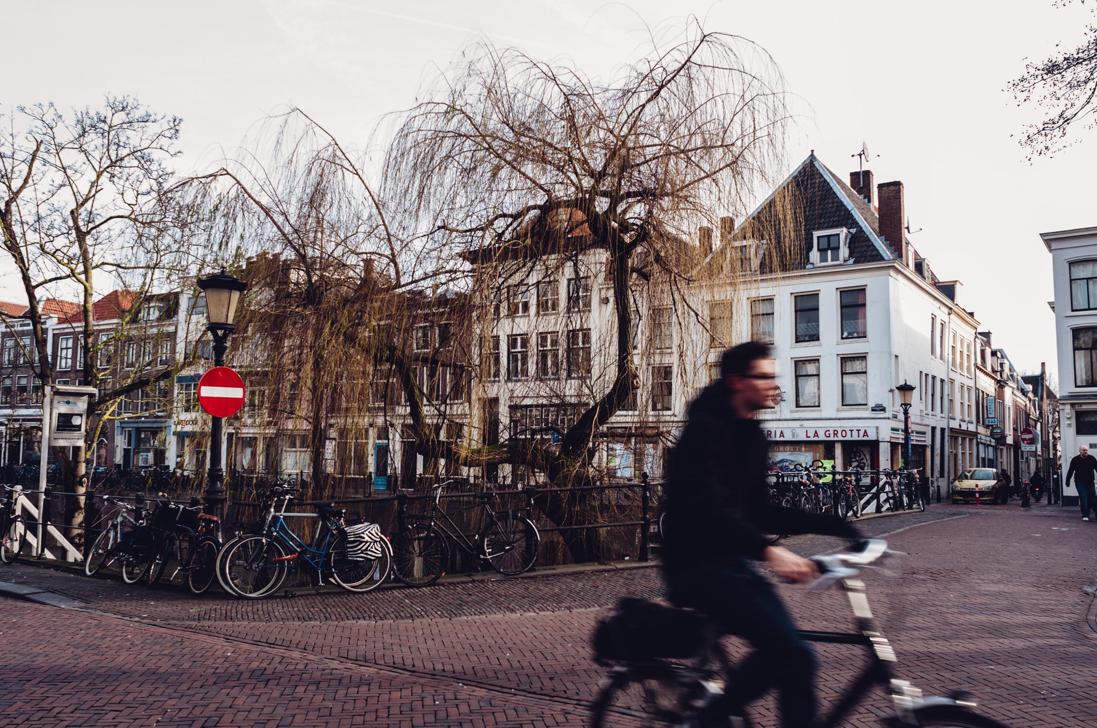 holland-web15.jpg
