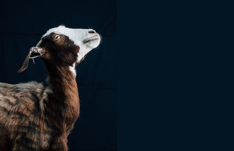 GoatS -