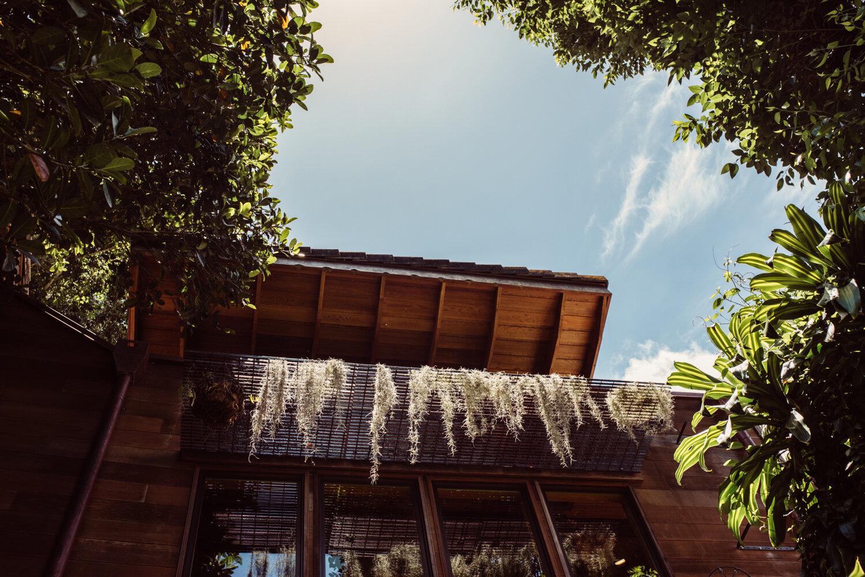 Treehouse Rising -