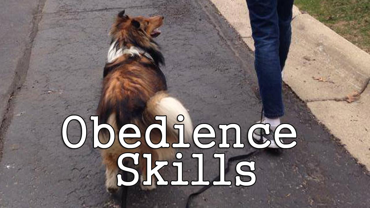 Obedience Skills