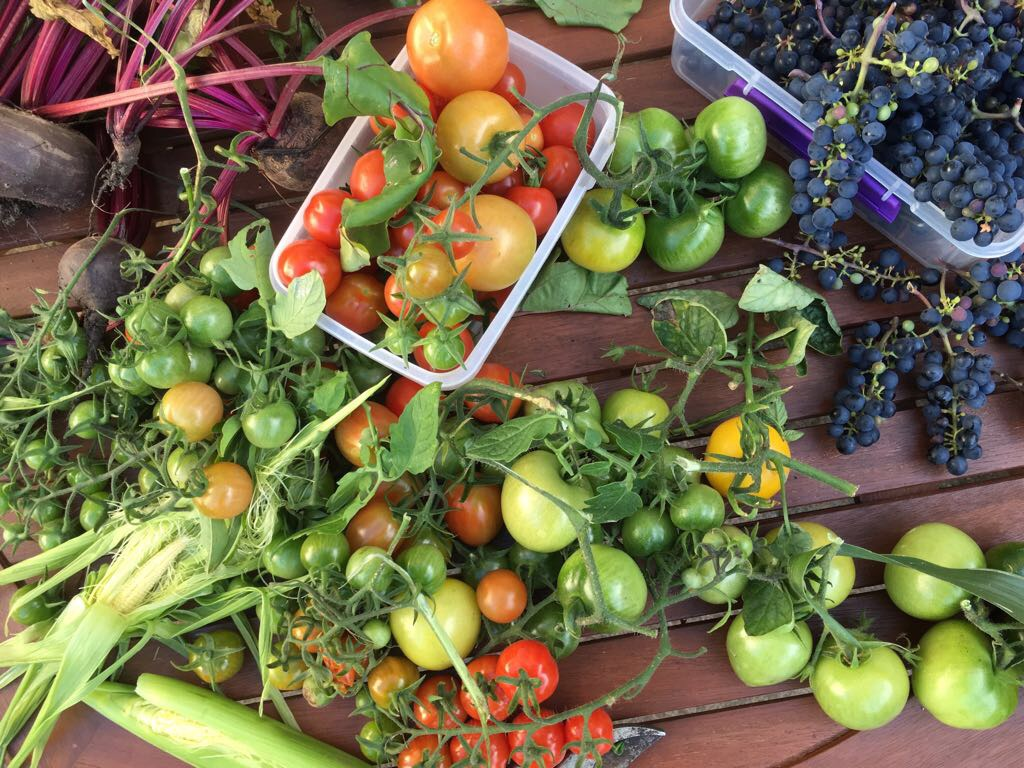 This year's harvest from the garden