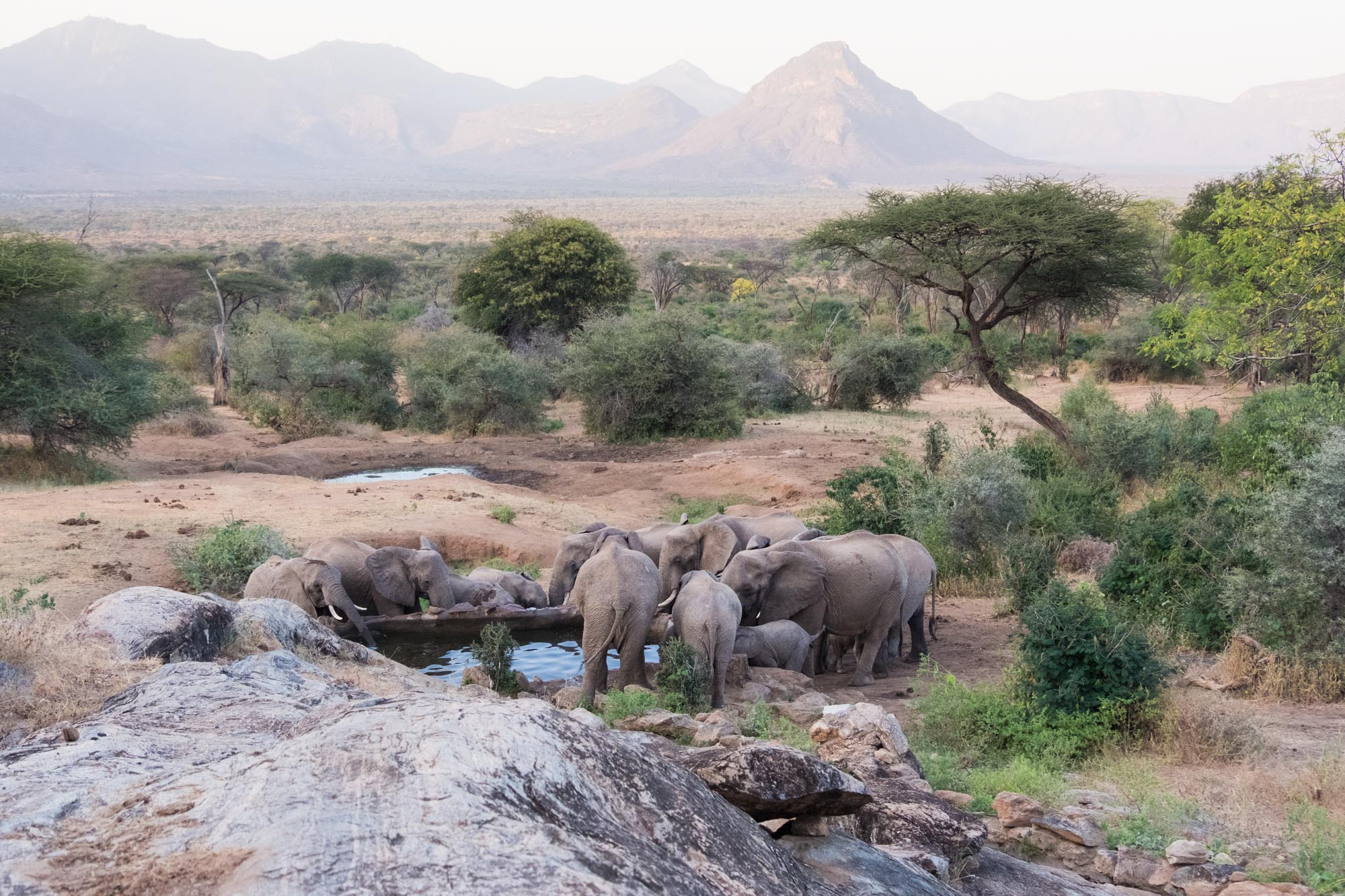 elephant-herd-well-sarara-northern-kenya-2018-01-08.jpg