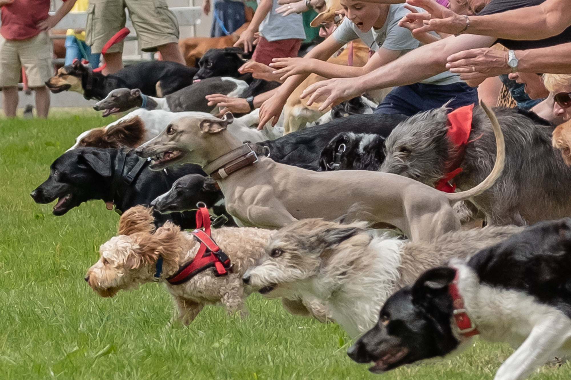 Dog race - Go!