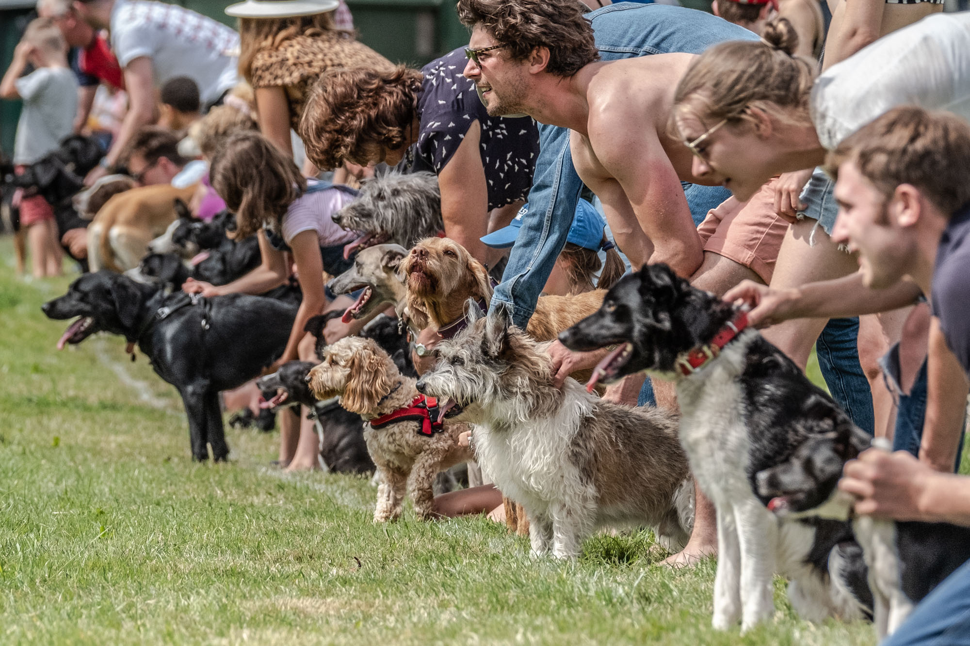 Dog race - ready, get set
