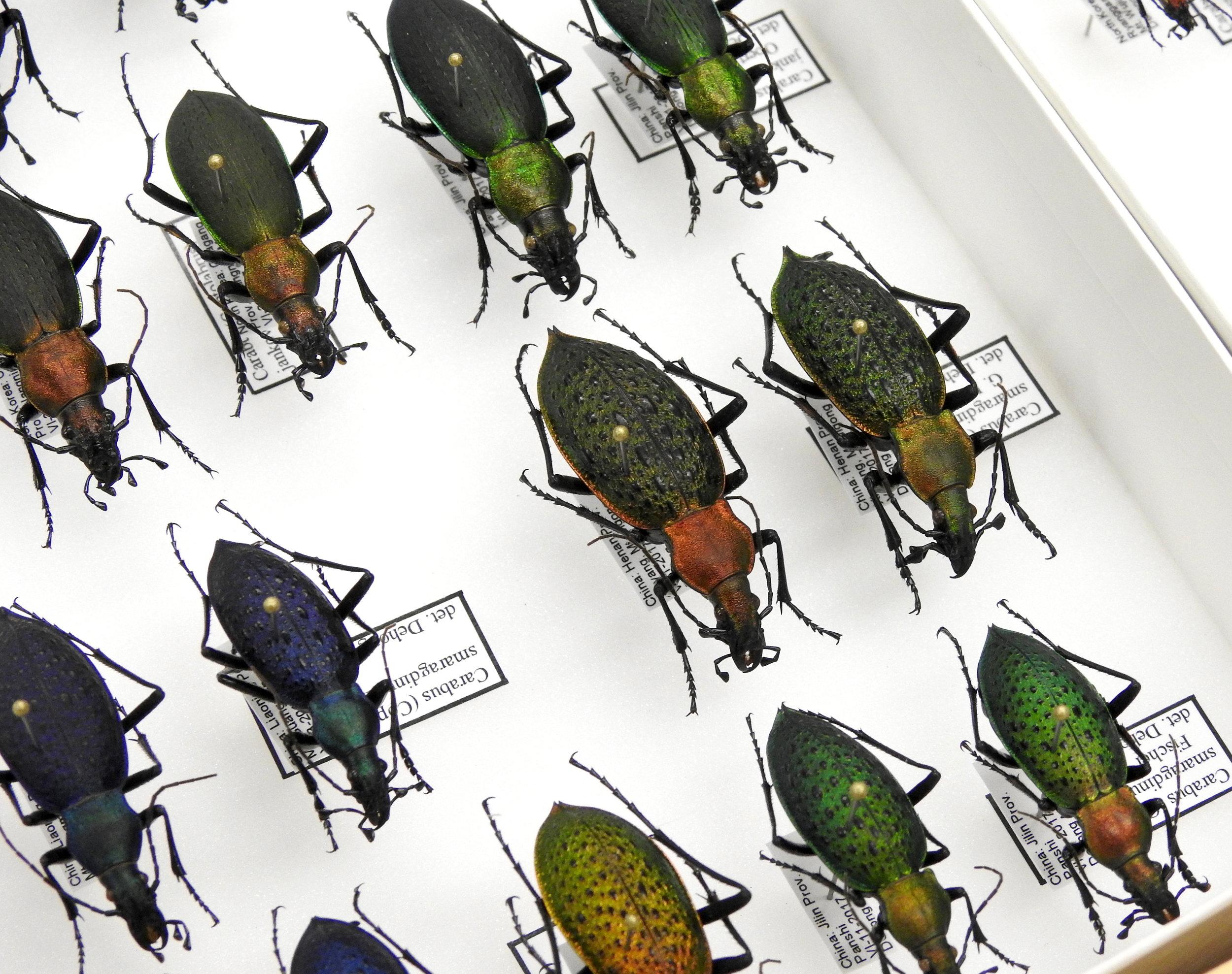 2018 Texas A&M Entomology Open House - Texas A&M University, College Station, TXJanuary 6, 2018