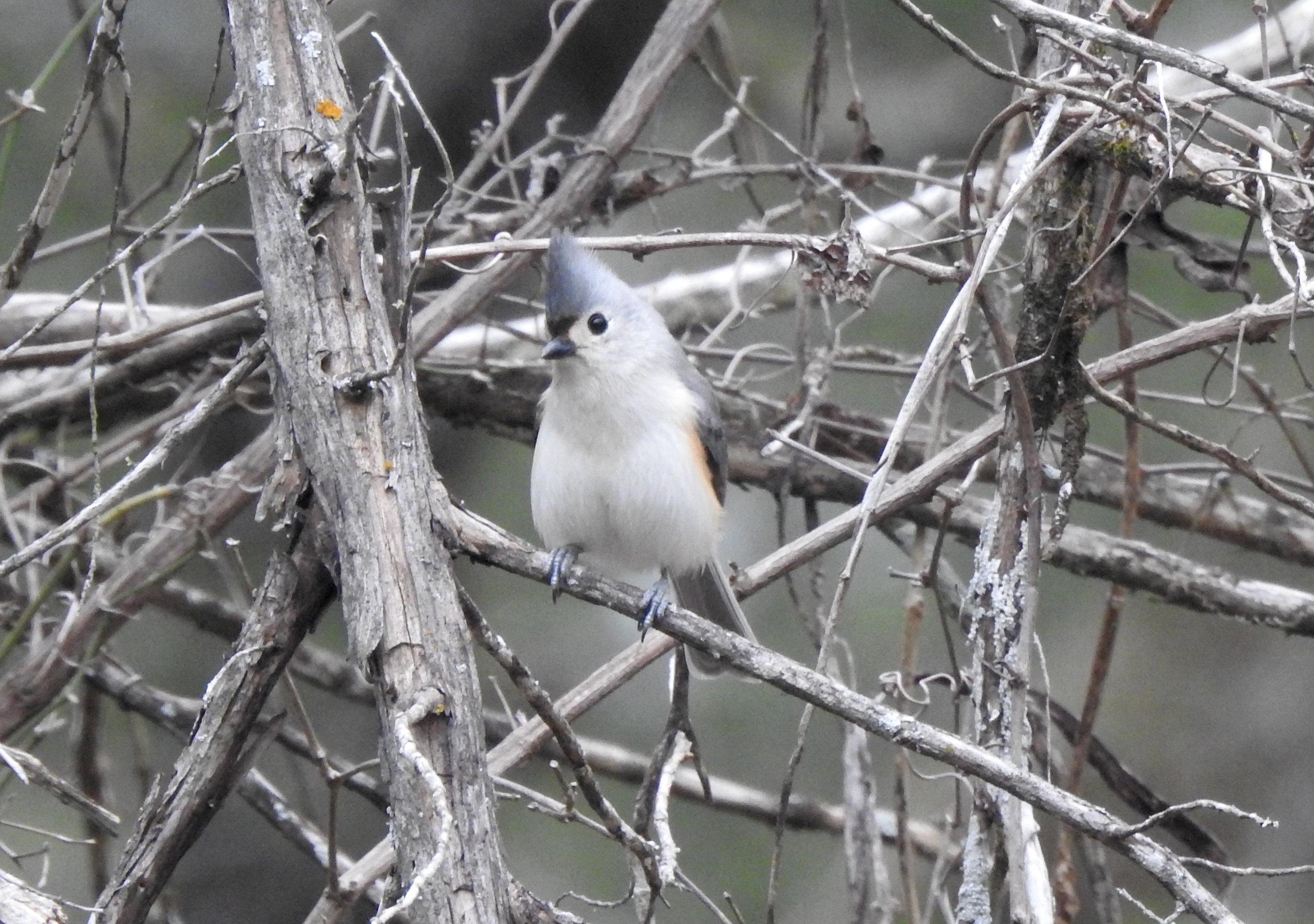 2018 Lost Pines Christmas Bird Count - McKinney Roughs Nature Park, Cedar Creek, TXDecember 29, 2018