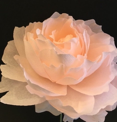 Pale Pink Peony.JPG