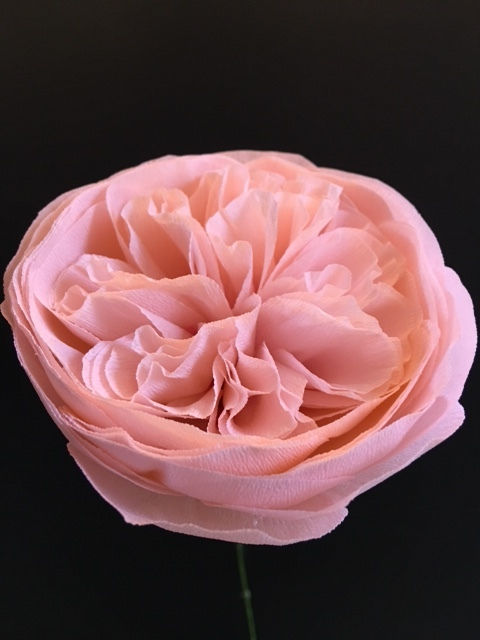 Pink Cabbage Rose.JPG