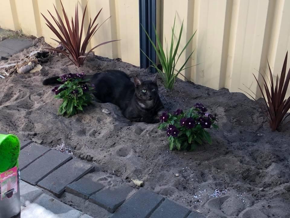 Rachel Nicholson's cat.jpg