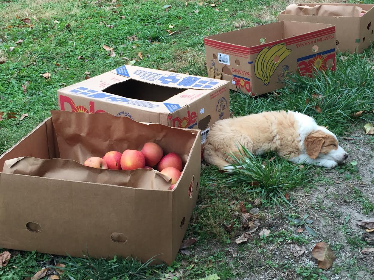 george sleeping with apples.jpg