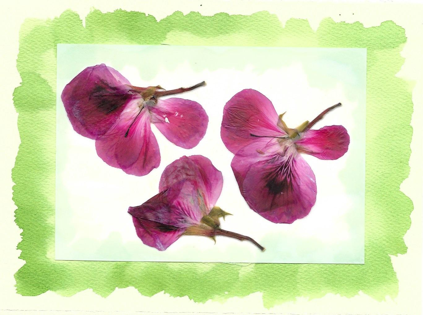 Pressed geranium