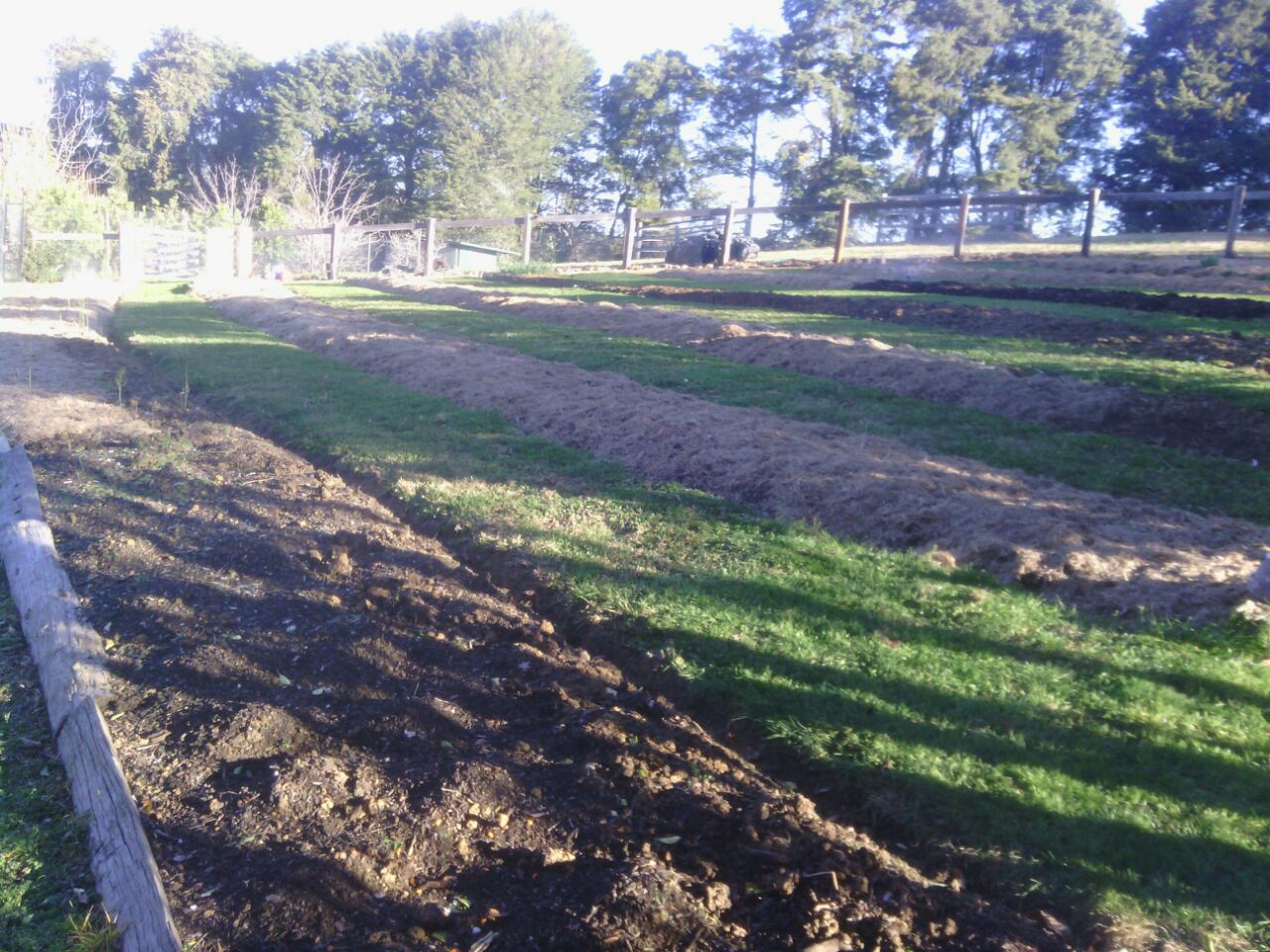 Establishing the asparagus beds above the orchard area.