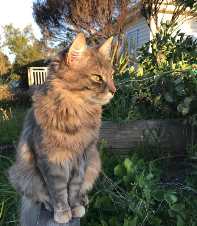 This dear girl,  Daisy , is missing from  Junction Road/Gulf Place  since early June 2018.