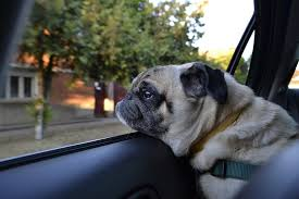 What should I do if I see a dog left in a hot car? - If you see a dog left in a hot car, ring the council on 0800 462 685. if it is displaying signs of extreme over-heating i.e., is passed out, lethargic or panting, call the police on 111.