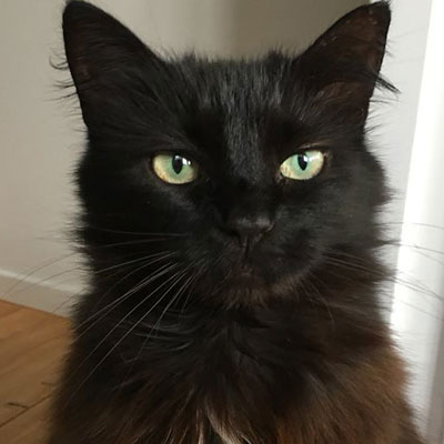 Microchipped and missing from the Te Whau  area since February 2018, please look out for dear  Raisin . She is shy, but very approachable. If you do see her around, please call Julia on  021 166 4822 .
