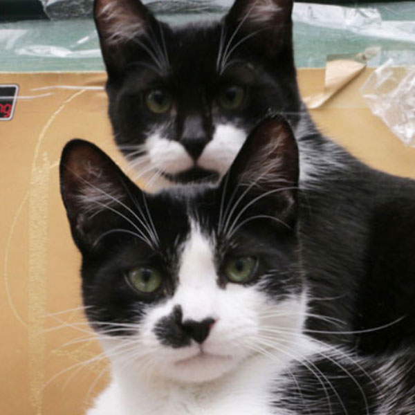 ADOPTED! Huey & Cricket - Here we have two adorable brothers, longing for a loving home. Best buddies Huey and Cricket need to be adopted together. They are total sweethearts, playful and incredibly handsome.