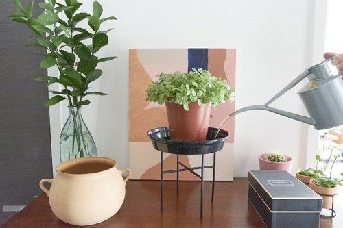 How to Water Your Indoor Plants The Right Way — The Houseplant