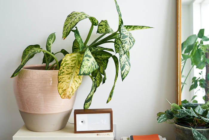 7 Mistakes People Make With Indoor Plants — The Houseplant ... on low light health, low light palms, low light flowers outdoors, low light shrubs, low light bromeliads, low maintenance shade plants, low light orchids, low palm bushes, low light trees, low light plants, low maintenance indoor plants, low light landscaping, low light weeds, low light succulents, low light tropicals, low light roses, low light bonsai, low light garden, low light vines, low light cactus,