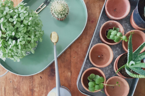 Get Your Free Houseplant Care Guide - When you sign up for the newsletter