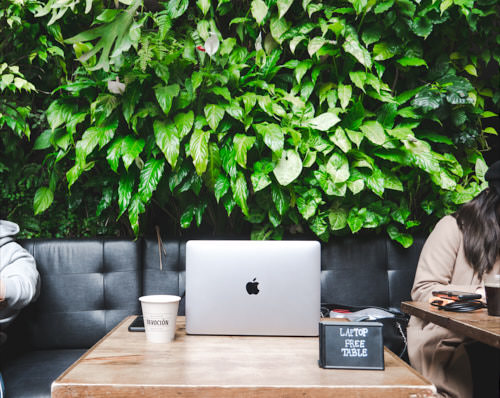 Indoor green wall in a Brooklyn coffee shop, NY. Photo by Emmanuel Kontokalos
