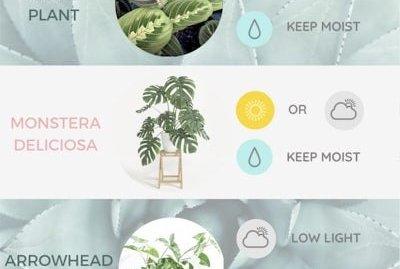 Immediately actionable tips from seasoned indoor gardeners.