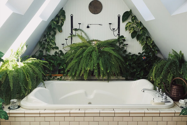 plants-that-thrive-in-the-bathroom.jpg