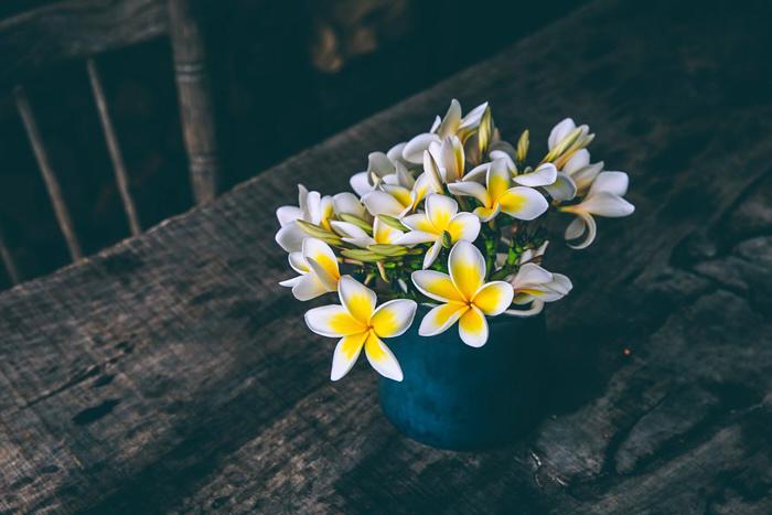 jazmín-planta-flor-flor-flor-hermosa-perfumada-cocina.jpg