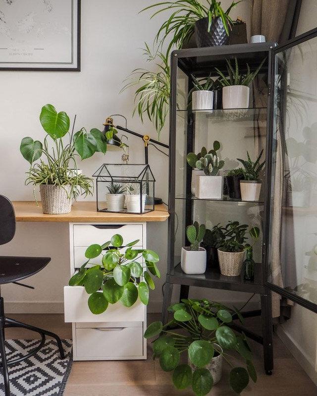 selva en casa