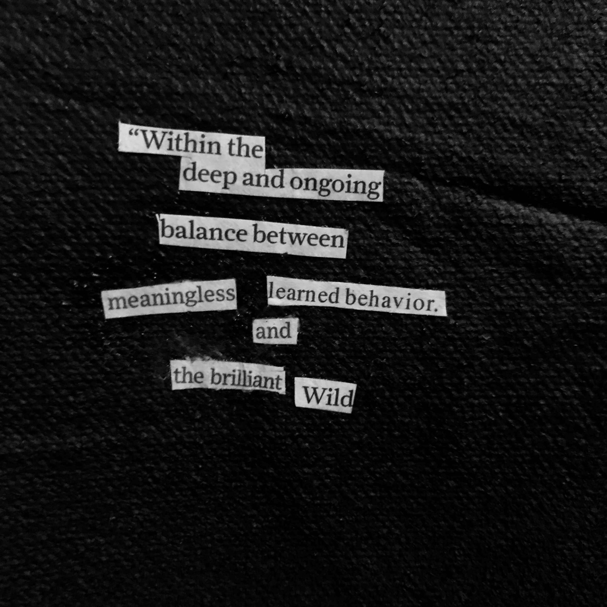 the wild  (detail)
