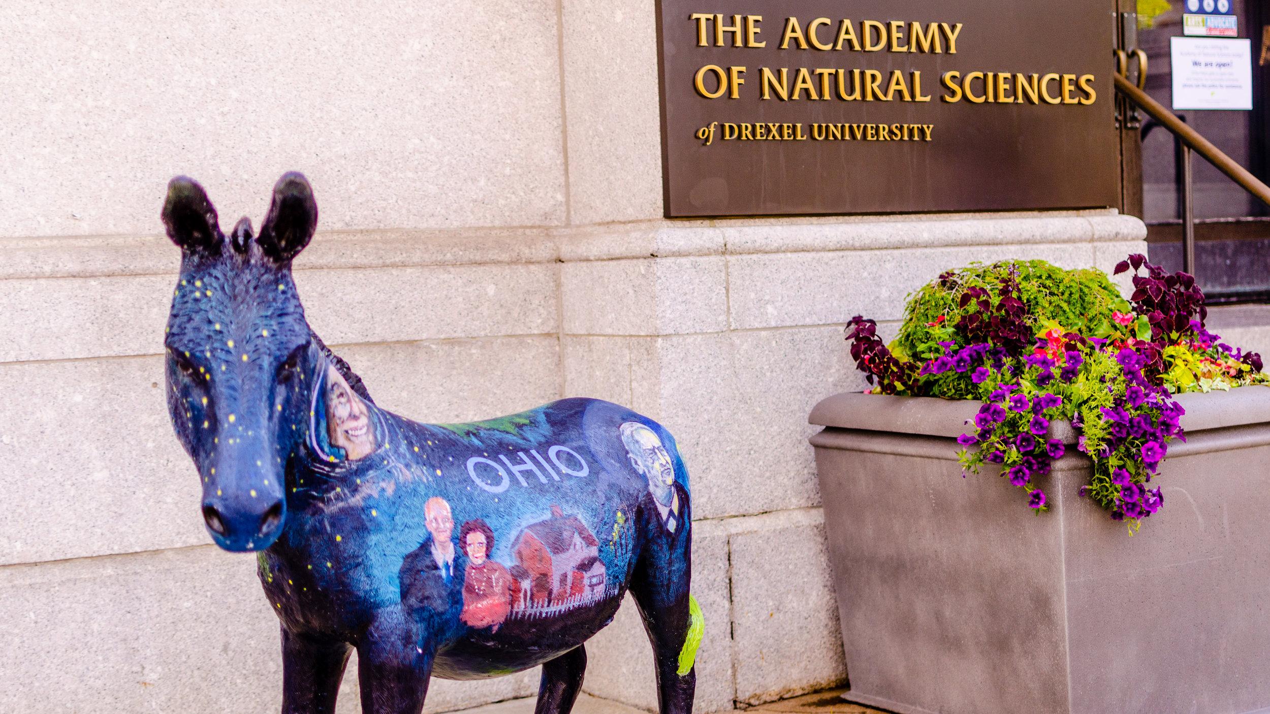 Donkeys-12.jpg