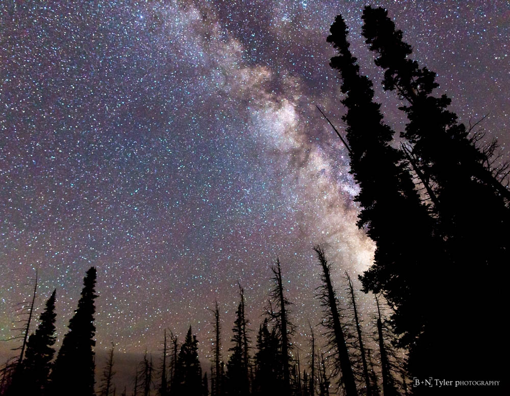 Tree silhoutte against the milky way