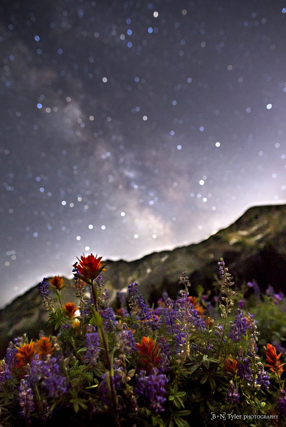 Wildflowers and milky way