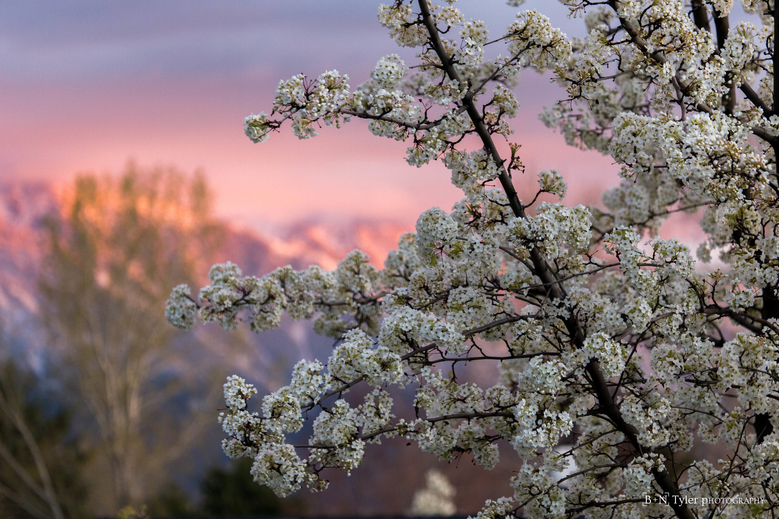 Spring time in the Wasatch