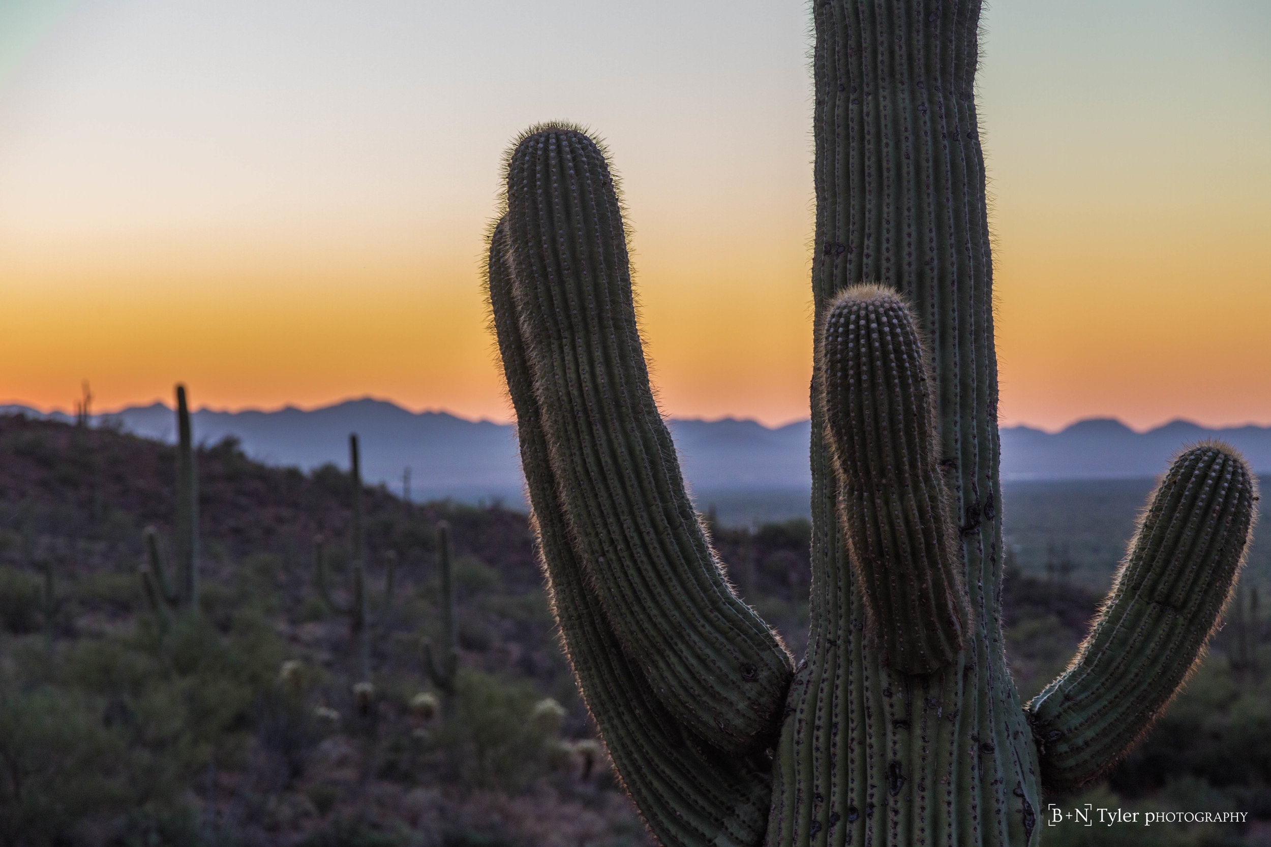 Sunset within the Saguaro National Park