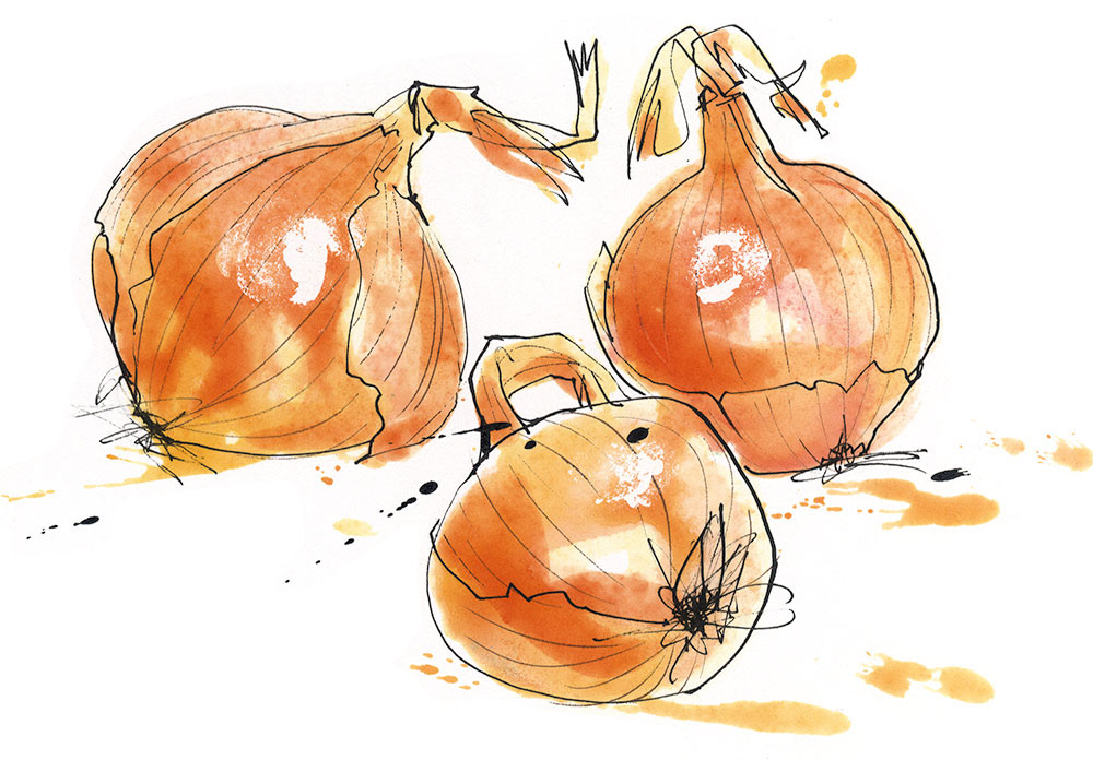 Louise Morgan onions.jpg