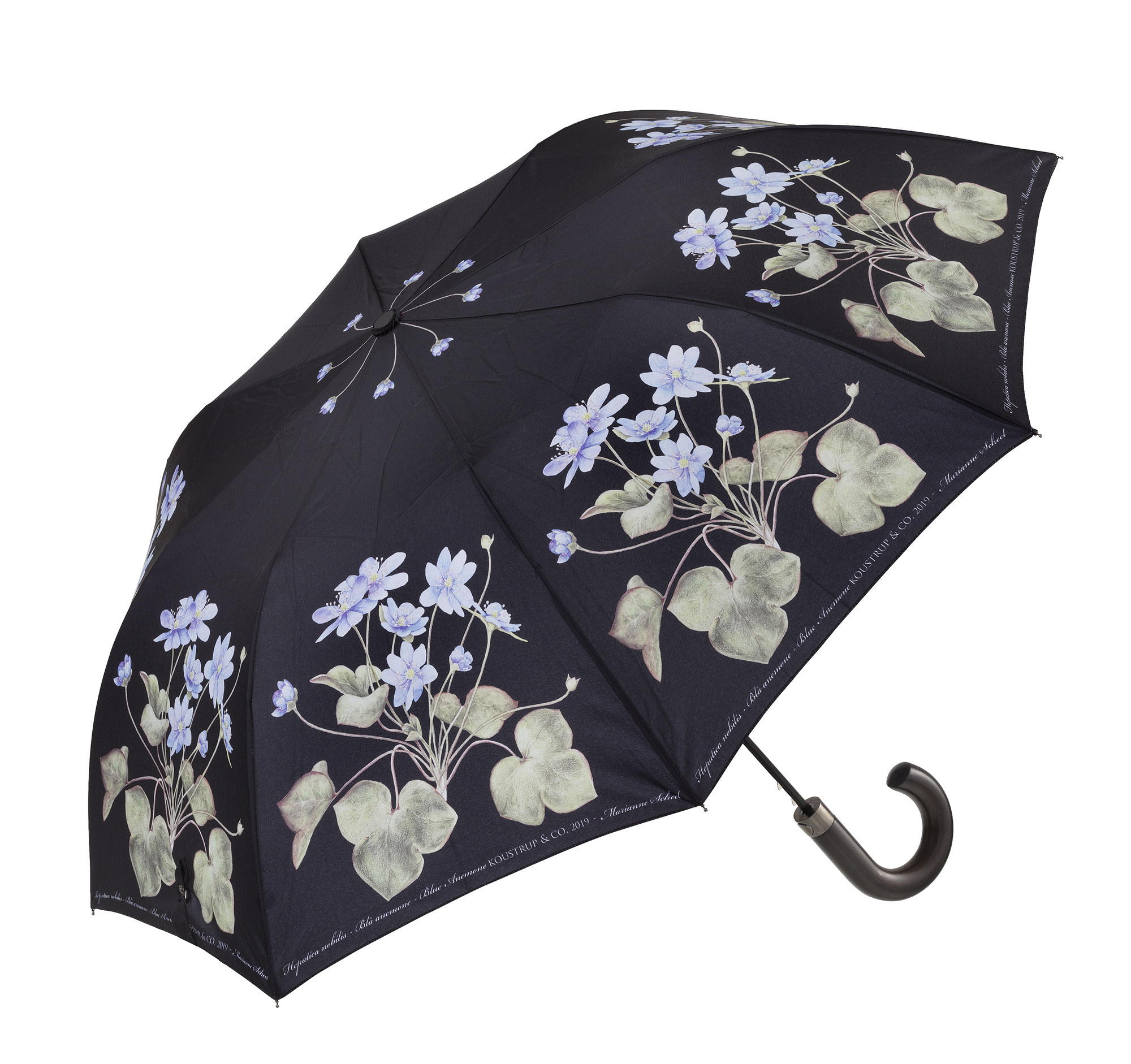 Paraply Anemone 1.jpg