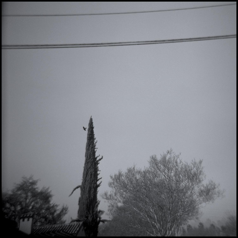 Crow Leaving a Tree