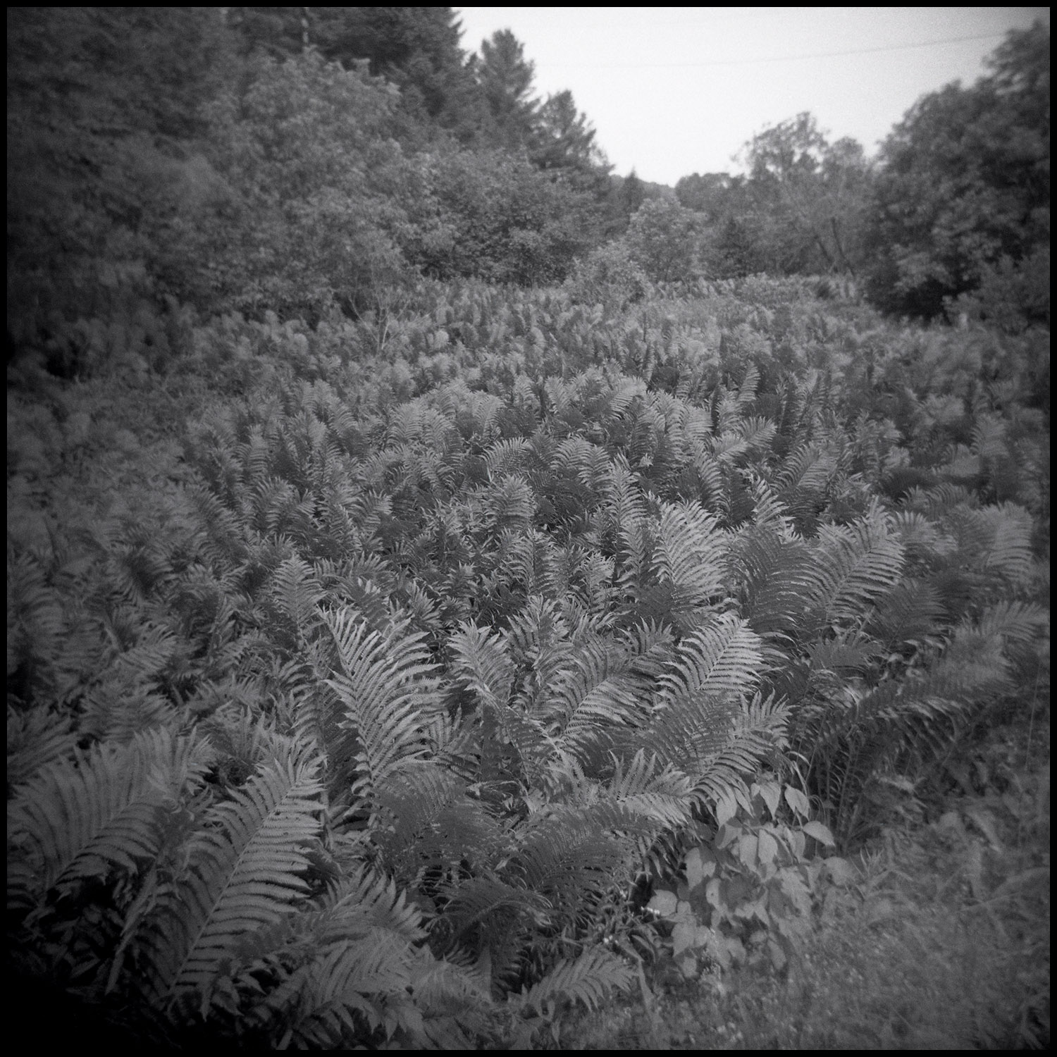 Image from a Vermont Walk 1