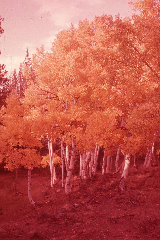 red_trees_slide.jpg