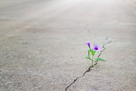 Flowers growing through a crack in the pavement, healing, trauma recovery, growth