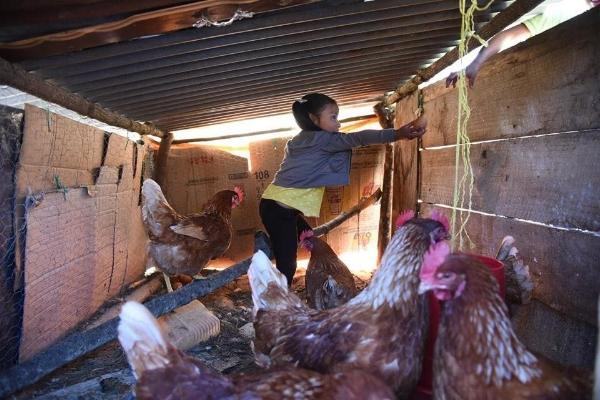Girl in chicken coop.jpg