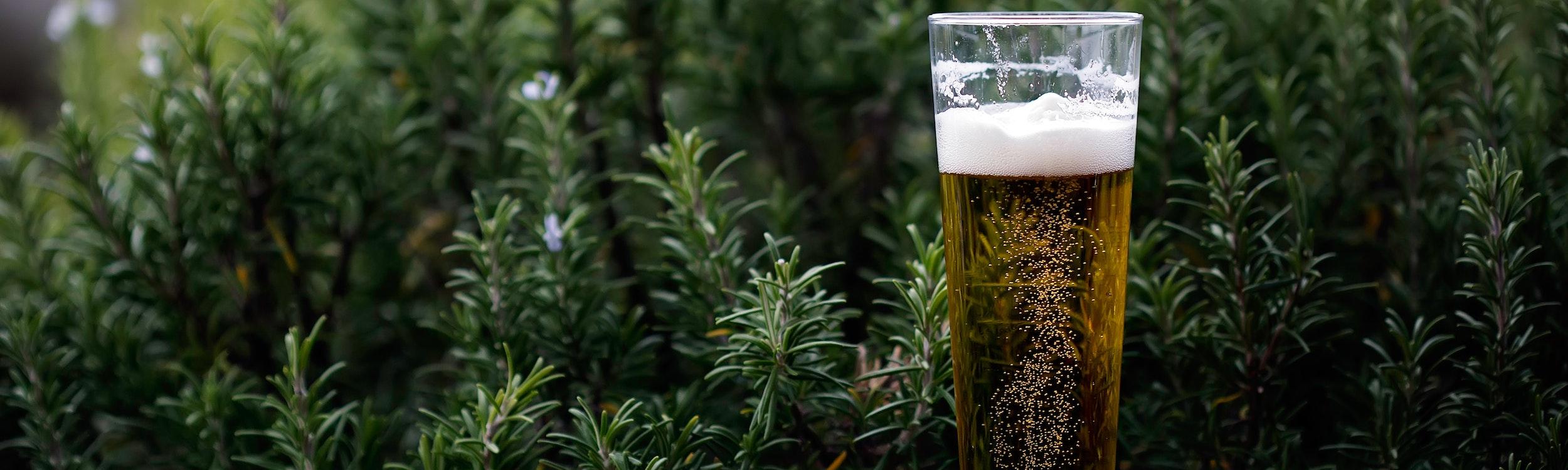 International Beer Day - In Ventura & Beyond