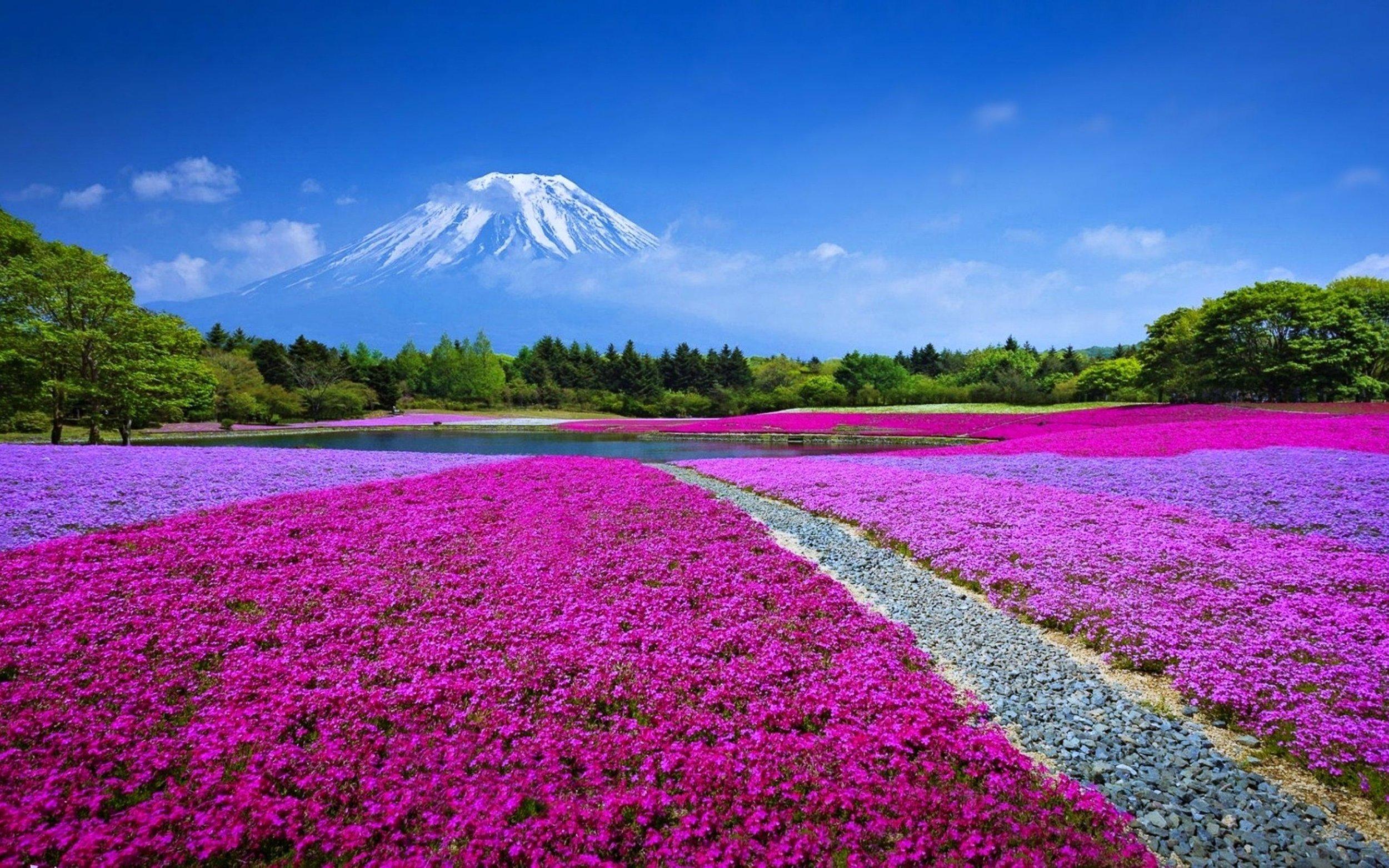 Mt. Fuji Japan.jpg
