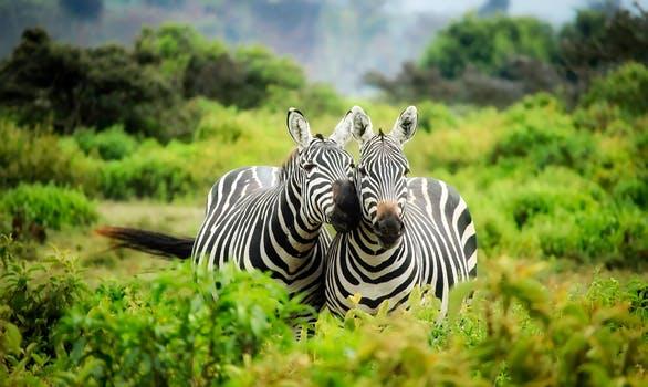 Africa 12.jpeg